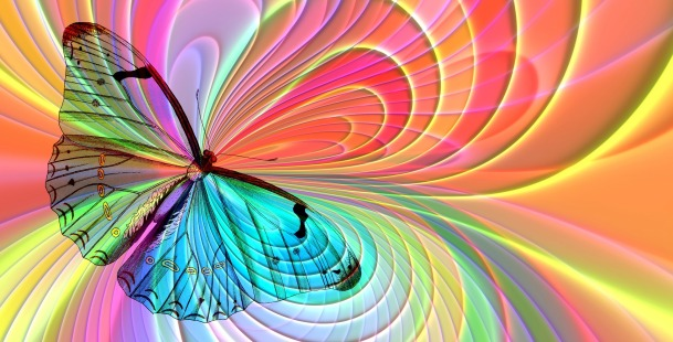 Butterfly on colour arrangement
